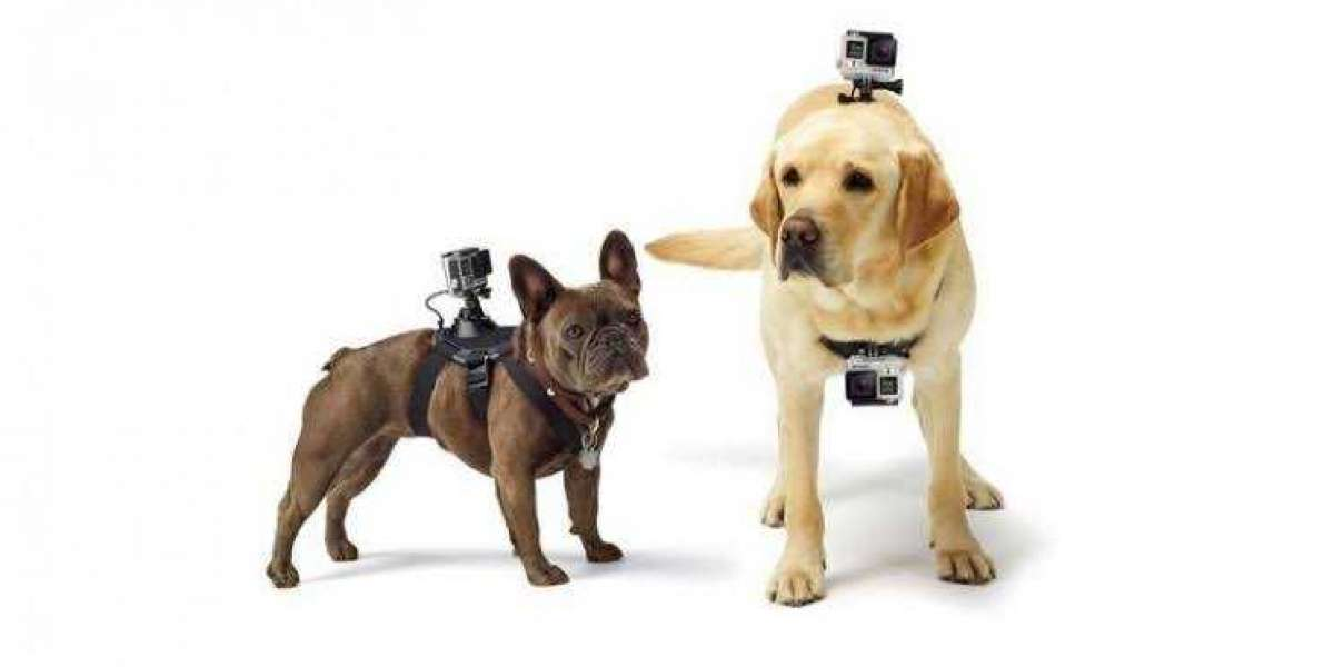 Pets and Gadgets