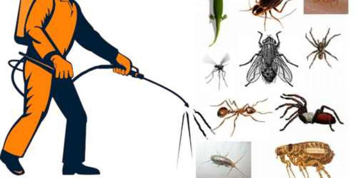 Pest Prevention: Simple Steps to Keep Your Home Pest-Free